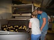 Aardappels sorteren